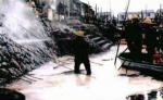 OIL-MICELLE